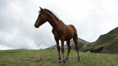 Horse colt in a mountain scenery Stock Footage