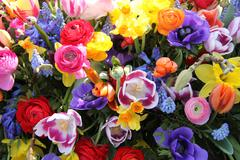 Spring flowers in bright colors Stock Photos