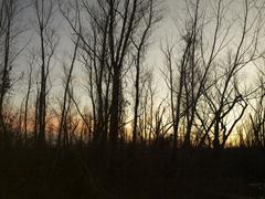 Delta Sunset view through the trees Stock Photos
