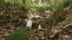 Red eyed white rabbits in the forest. - stock footage