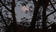 Stock Video Footage of Full Moon Evening