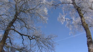 Stock Video Footage of Frozen Deciduous trees against a blue sky - low angle + pan