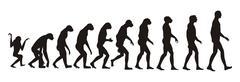 human evolution - stock illustration
