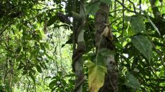 Amazon Rain forrest - stock footage