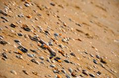 Seashells on the sand beach in zandvoort (northen sea in holland) Stock Photos