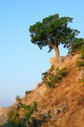 Single tree standing on the hill Stock Photos
