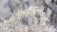 Grass blade covered with hoarfrost - close up - stock footage