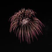 firework explode on night sky. - stock photo