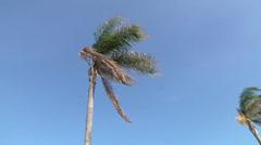 Palm tree, sea, Giardini (ME), Italia. Stock Footage