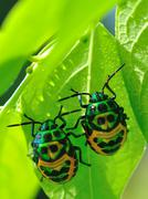 colorful catch insects on the leaves. - stock photo