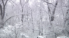 Winter Wonderland - 1 - stock footage