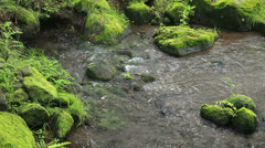 Water stream and moss Stock Footage