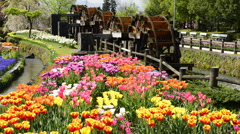 Tonami Tulip Fair, Toyama, Japan Stock Footage