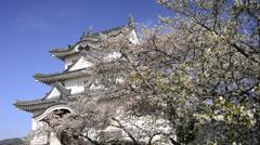 Uwajima Castle and Cherry Blossoms, Ehime, Japan Stock Footage