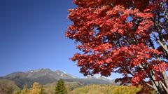 Mt. Norikura and Japanese Rowan, Nagano, Japan Stock Footage