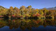 Autumn Leaves and Kamaike Lake, Nagano, Japan Stock Footage