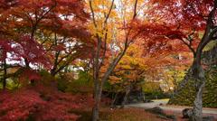 Kai Garden, Komoro Castle, Nagano, Japan Stock Footage