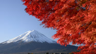 Stock Video Footage of Mount Fuji and Autumn Leaves, Yamanashi, Japan