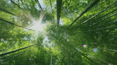 Bamboo forest, Aichi Stock Footage