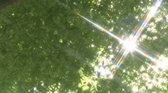 Fresh green Stock Footage