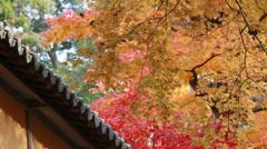 Maple leaves Stock Footage