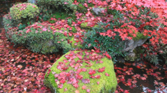 Japanese garden and foliage Stock Footage
