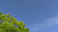 Fresh green and sky Stock Footage
