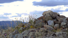 Stone mound in the steppe Stock Footage