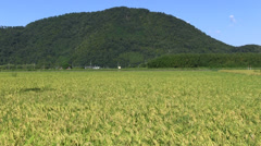 Japanese countryside at Fall Stock Footage