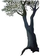 Deciduous Tree - stock illustration