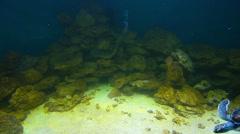 sea turtles and sharks - stock footage