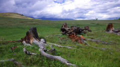 Time Lapse Stumps and Snags in steppe Stock Footage