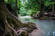 Stock Photo of River in forest