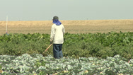 Stock Video Footage of Migrant Farm Worker