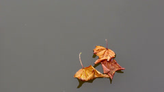 Autumn leaves HD Stock Footage