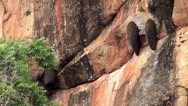 Stock Video Footage of Beehives of Giant honey bee (Apis Dorsata) at Sigiriya's cliff.