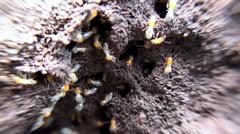 Termites inside a termite mound. Macro shooting. Stock Footage