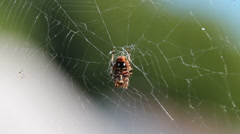 Spider in its web Stock Footage