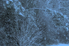 Snow storm in the forest at night.  Slow pan right Stock Footage