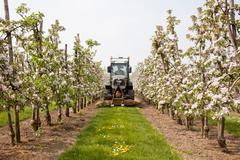 Mowing grass in blossoming orchard in holland Stock Photos