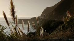 Pampas Grass at Sunset Big Sur Stock Footage