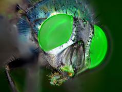 Eyes of a fly Stock Photos