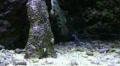 LSD-Fish in coral reef aquarium Footage