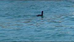 Balaklava cove, cormorant Stock Footage