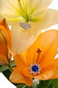 lilies bloom with luxury - stock photo