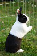 hare locked up - stock photo