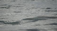 Seagul Denmark slomo 1 Stock Footage