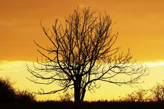 Lone bare tree in the sunset Stock Photos