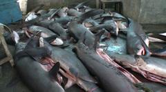 Pile of dead sharks in a shark fin trader - shark finning Indonesia Stock Footage