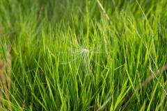 Background with green grass and thistle seed_2 - stock photo